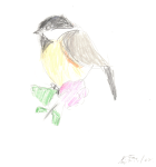 Sketch of a bird 2008