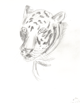 Sketch of tiger 2008